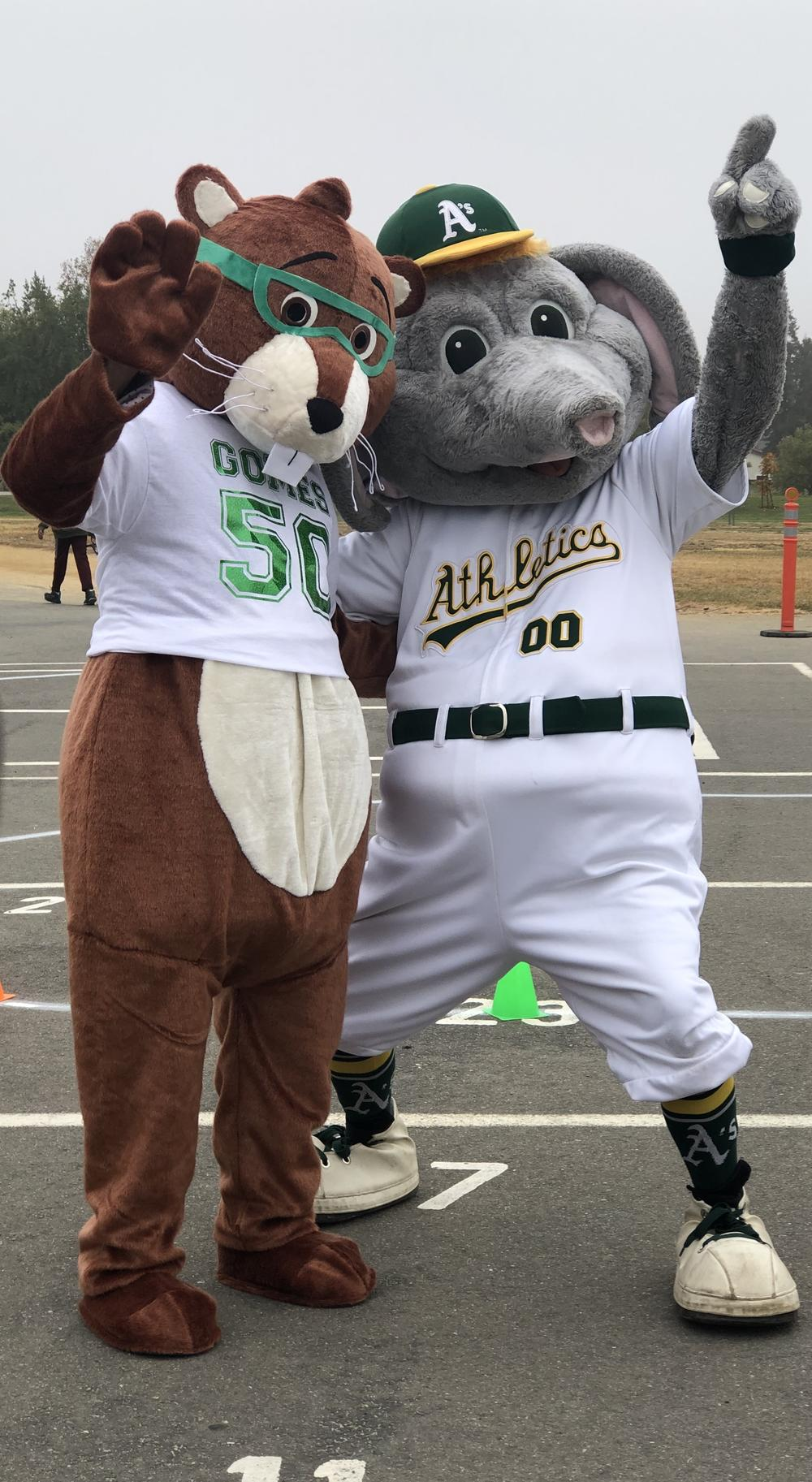 Oakland A s mascot Stomper poses with Gomes Elementary Gopher